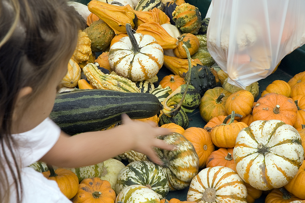 Girl touching a gourd